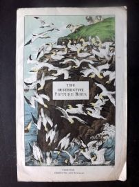 Adam White C1860 The Instructive Picture Book Illus. Title Page. Birds